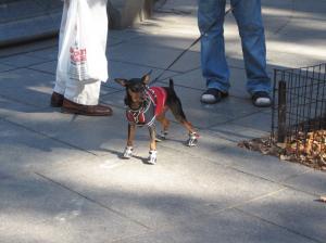 hondje met schoentjes